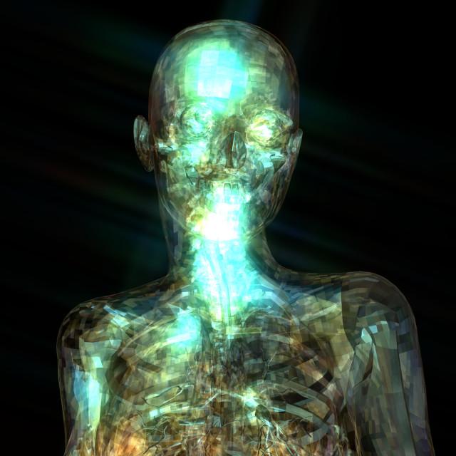 """3D Illustration of a human Anatomy"" stock image"