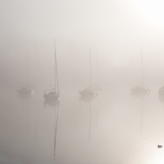 """""""From out of the fog..."""" stock image"""