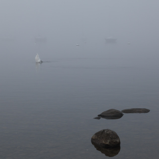 """""""Misty Day Series - 10 of 23"""" stock image"""