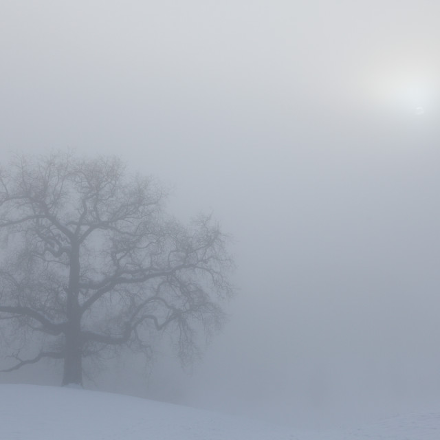 """""""Misty Day Series - 11 of 23"""" stock image"""