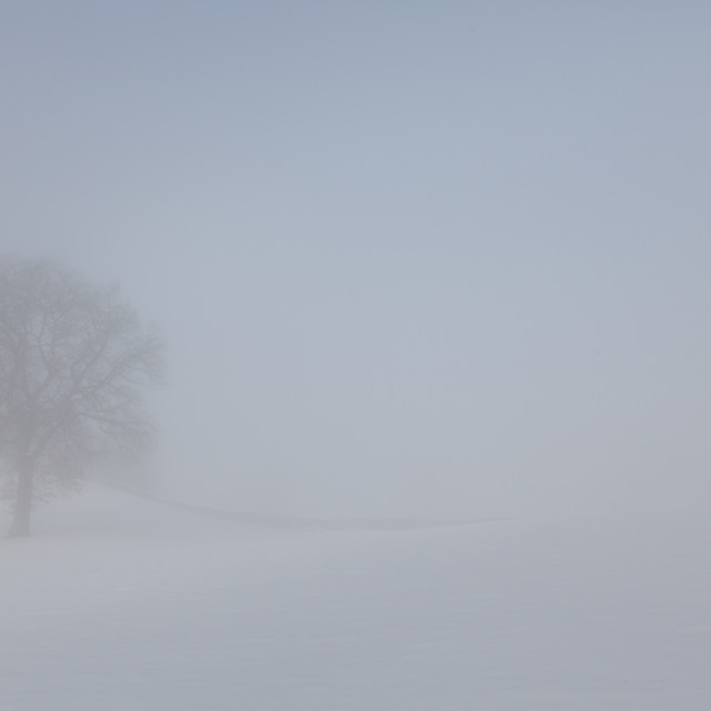 """""""Misty Day Series - 12 of 23"""" stock image"""