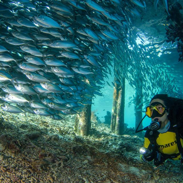 """Underwater paradise"" stock image"