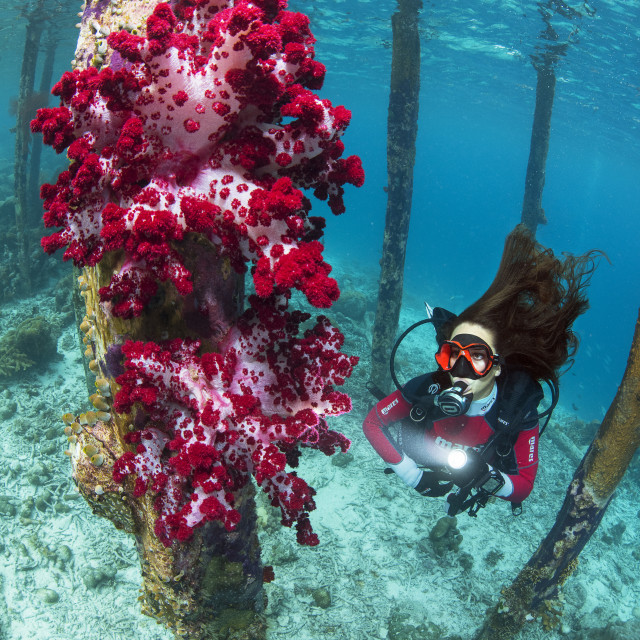 """Exploring the underwater world"" stock image"