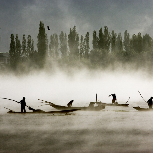 """Boatmen in Dal Lake clearing weeds early in the morning. Srinagar, Kashmir,..."" stock image"