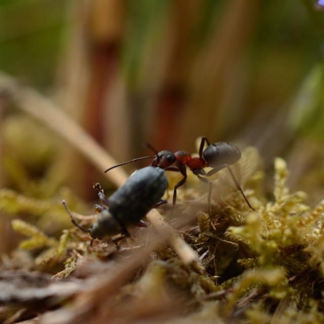 """Ant vs Beetle"" stock image"