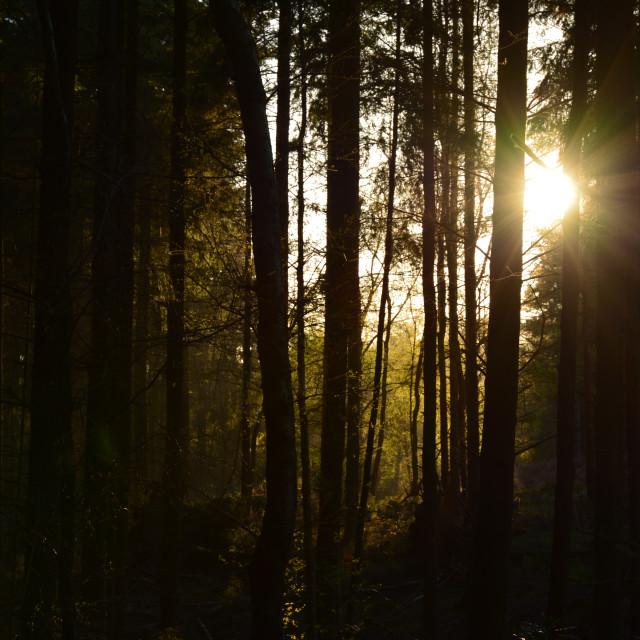 """sunset trees"" stock image"