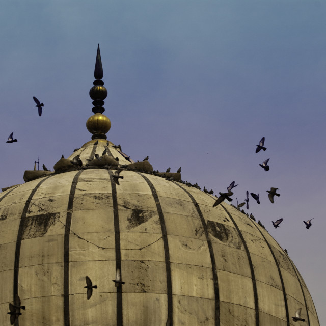 """Pigeons around dome of the Jama Masjid in Delhi in India"" stock image"