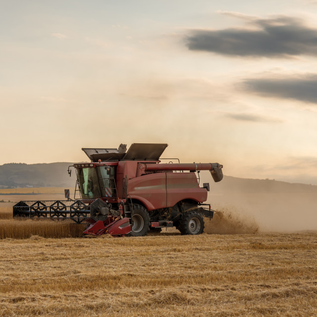"""""""Combine harvesting the field of wheat on a sunset"""" stock image"""