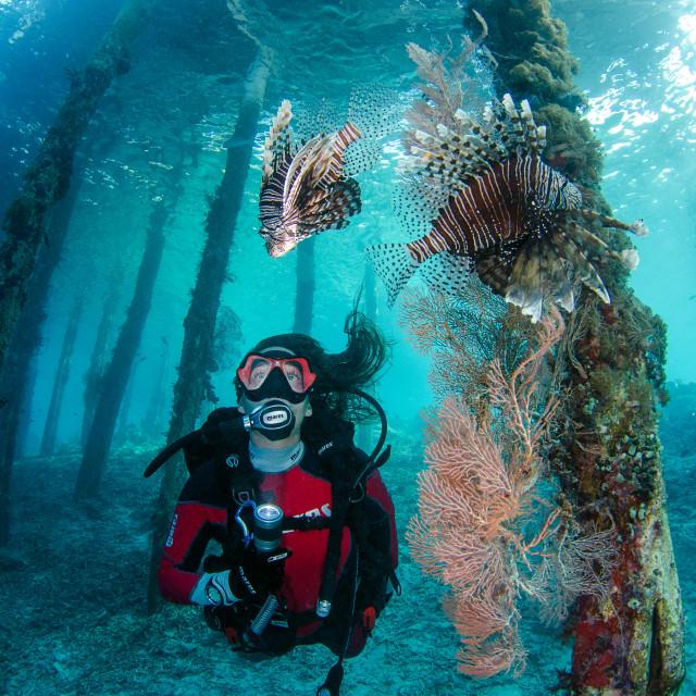 """""""Underwater life"""" stock image"""
