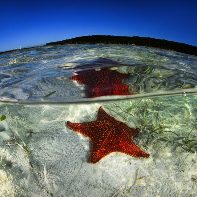 """Sea Star"" stock image"