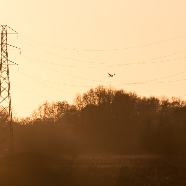 """""""Silhouette of a Kestrel falcon raptor (Falco tinnunculus) hunting hovering..."""" stock image"""