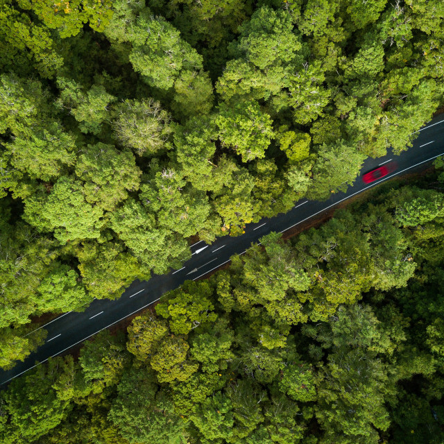 """Aerial Photo - Red car passing through a forest"" stock image"