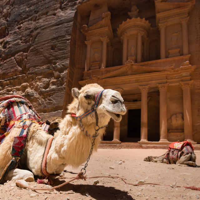 """Camels in front of the Treasury in Petra"" stock image"