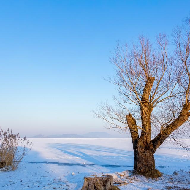 """""""Beautiful winter landscape from lake Balaton of Hungary"""" stock image"""