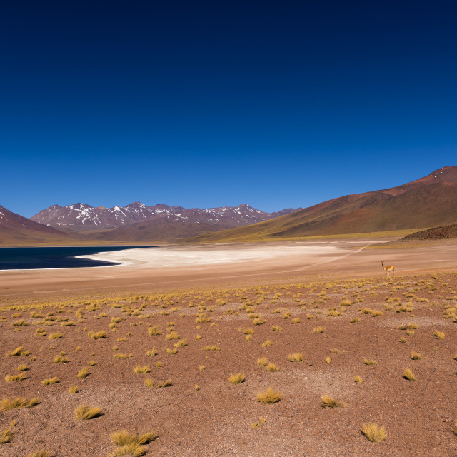 """""""The Miscanti Lake (Laguna Miscanti) with the surrounding mountains and volcano in the Atacama Desert, Chile"""" stock image"""