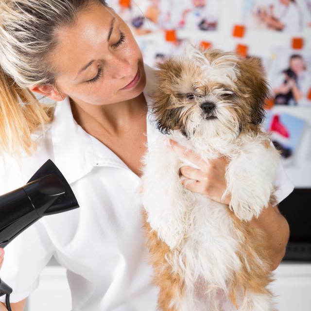 """Vet with his dog Shih Tzu"" stock image"