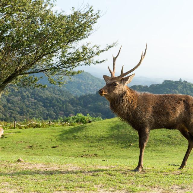 """""""Deer and natural landscape"""" stock image"""