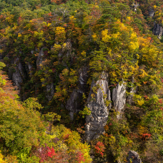 """Autumn Naruko canyon"" stock image"