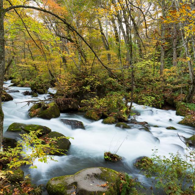"""Oirase Stream in autumn"" stock image"