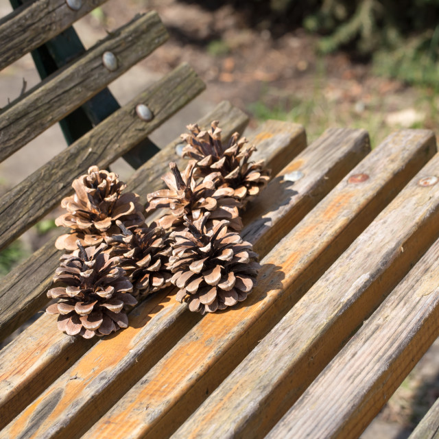 """Dry fir cones on a wooden bench."" stock image"