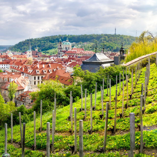 """Orchard above beautiful Prague in Czech, Europe"" stock image"