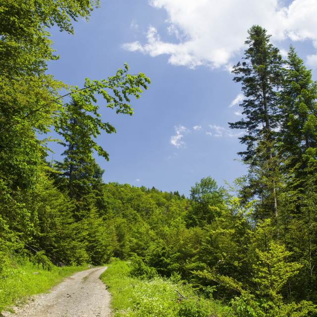 """""""Forest summer road"""" stock image"""