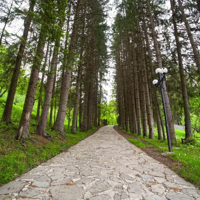 """""""Evergreen park alley"""" stock image"""
