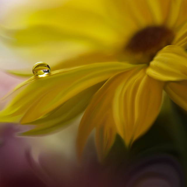 """""""Tranquil abstract closeup art photography.Pastel Flower."""" stock image"""