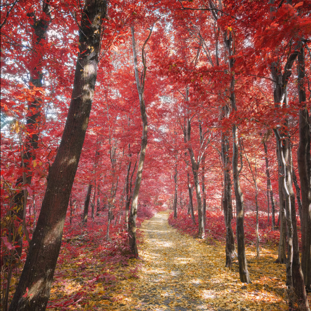 """""""Path through the Woods in Autumn"""" stock image"""