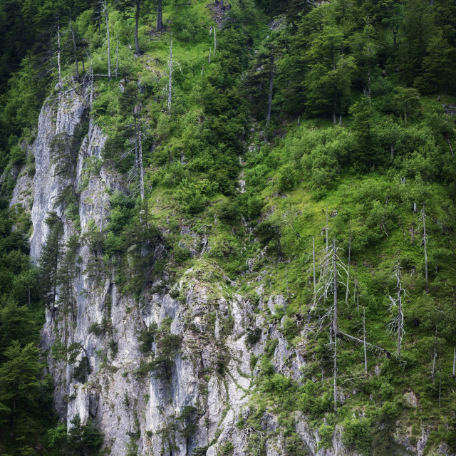 """""""Rocky Mountain formation in the dense Forest"""" stock image"""