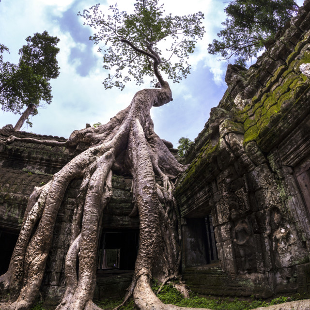 """Picture of Ta Prohm Temple. Ancient temple Angkor Wat in Cambodia"" stock image"