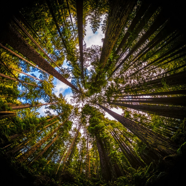 """Fish-Eye Forest Landscape"" stock image"