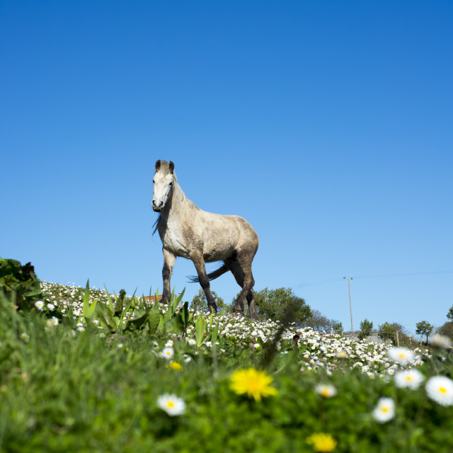 """beautiful irish horse in a field"" stock image"