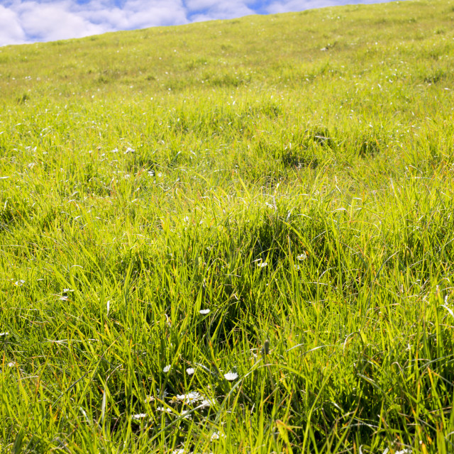 """beautiful green grass of county kerry"" stock image"