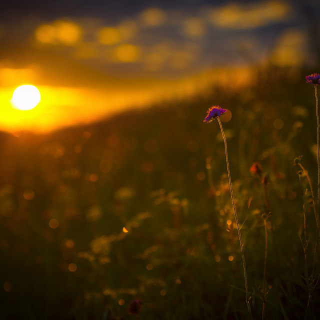 """""""Flowers resting on the sun"""" stock image"""