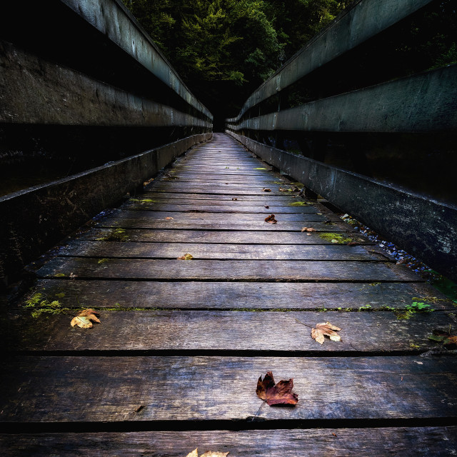 """""""Bridge Leading into the thick Forest"""" stock image"""
