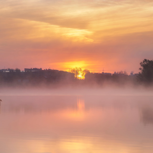 """""""Swans resting on the Lake at Dawn"""" stock image"""