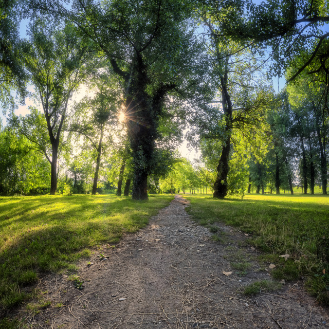 """""""Trail leading trough the forest"""" stock image"""