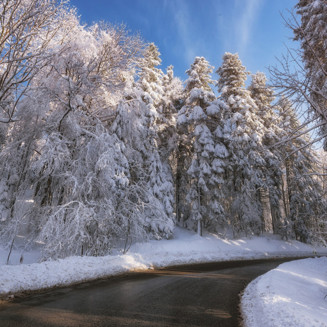 """""""Road leading into the forest covered with white snow"""" stock image"""