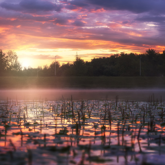 """""""Sunrise on the Lake covered with Water Lily's"""" stock image"""