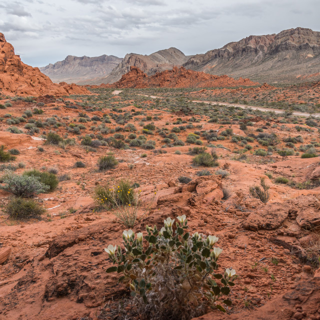 """valley of fire 20"" stock image"
