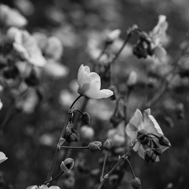 """""""Wildflowers in Black and White"""" stock image"""