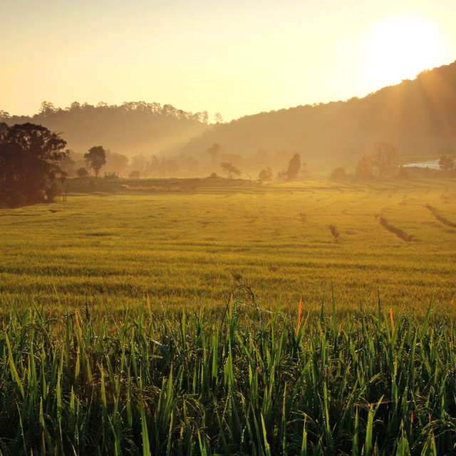 """Terraced Rice Fields at Sunrise, Chiang Mai"" stock image"