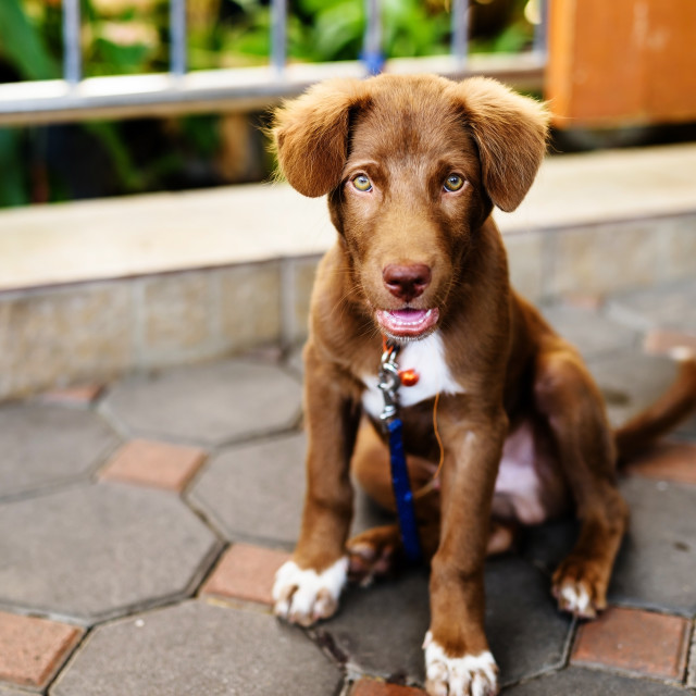 """""""puppy dog chained"""" stock image"""