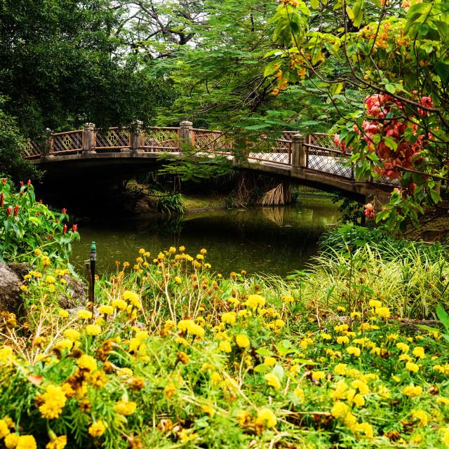 """beautiful yellow flower garden"" stock image"