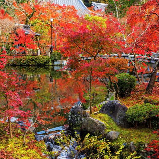 """""""Eikando garden in autumn, Kyoto"""" stock image"""