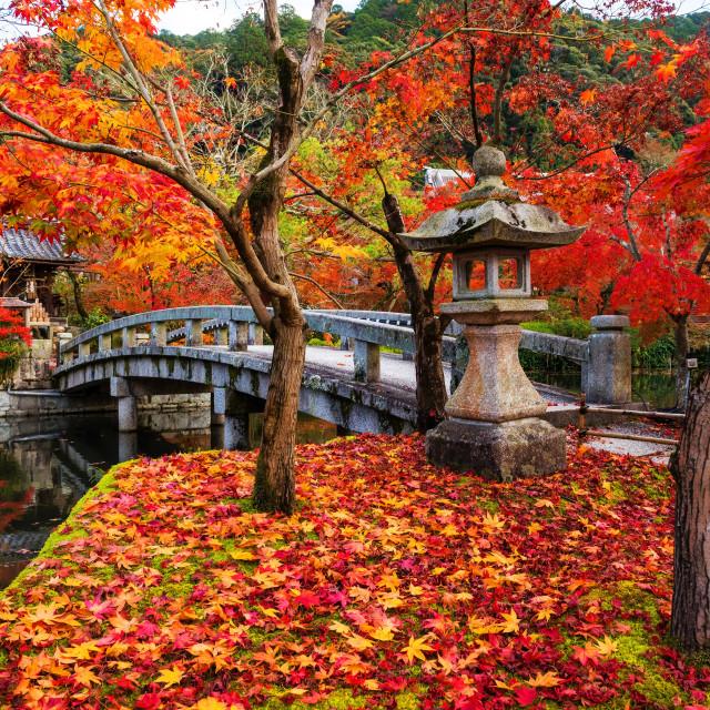"""""""Eikando in autumn, Kyoto"""" stock image"""