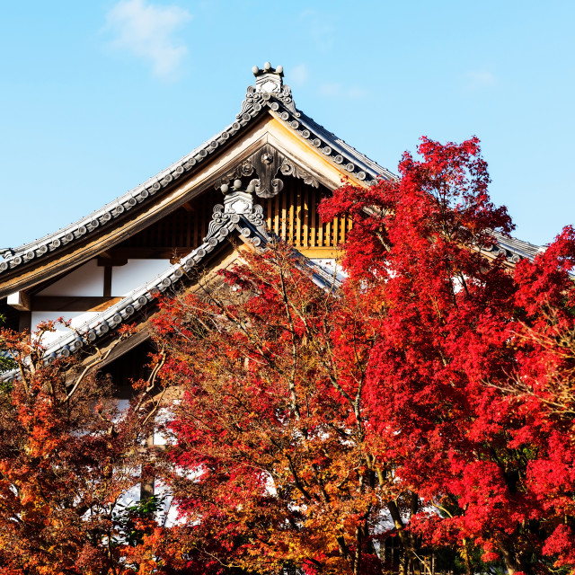 """""""Eikando temple roof with fall colors, Kyoto"""" stock image"""