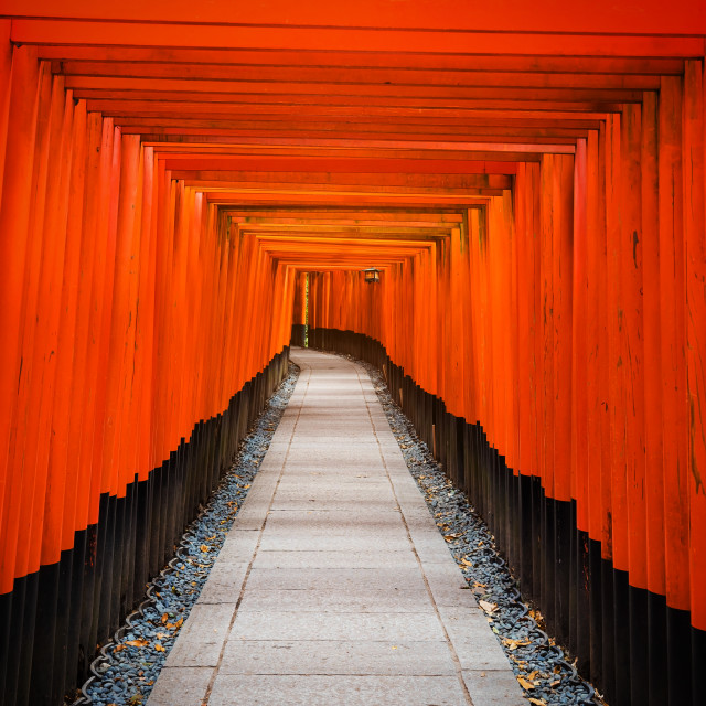 """Tori Gate at Fushimi Inari, Kyoto"" stock image"