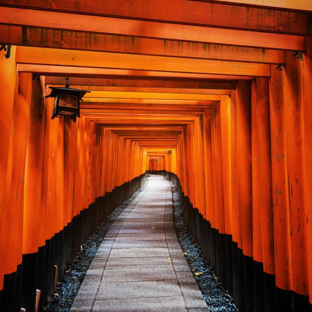 """""""Tori Gate in Fushimi Inari, Kyoto"""" stock image"""